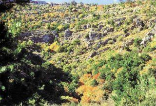 Senderismo Granada Barranco de la Fonfría y pino de La Señora